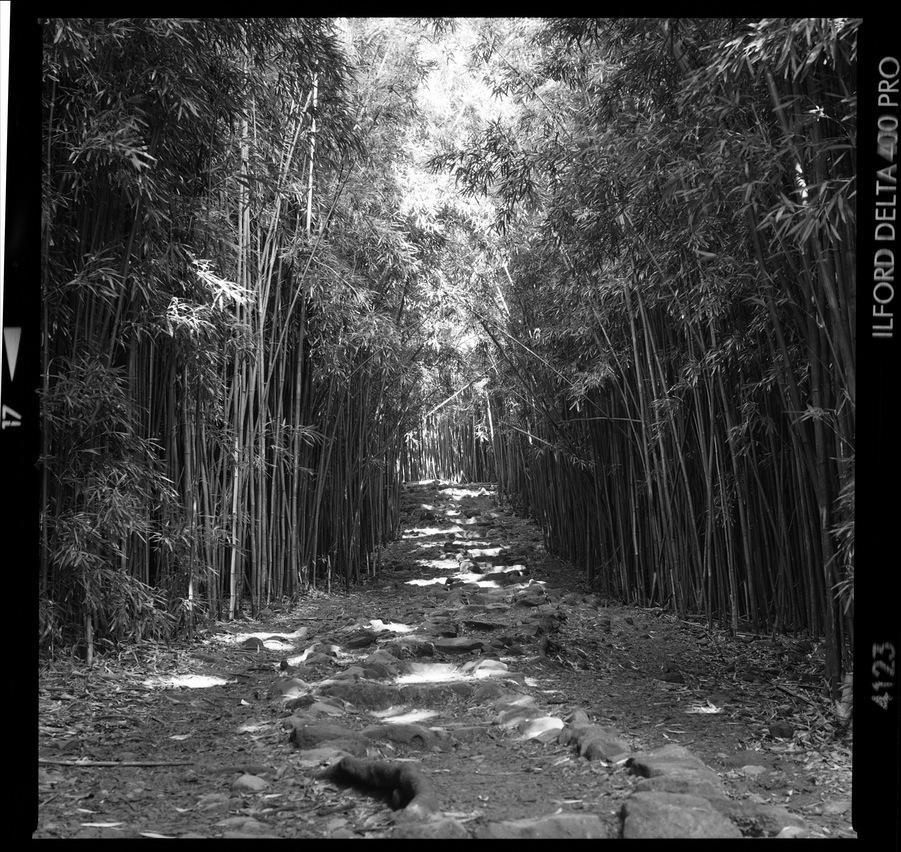Maui_Bamboo_003_blog