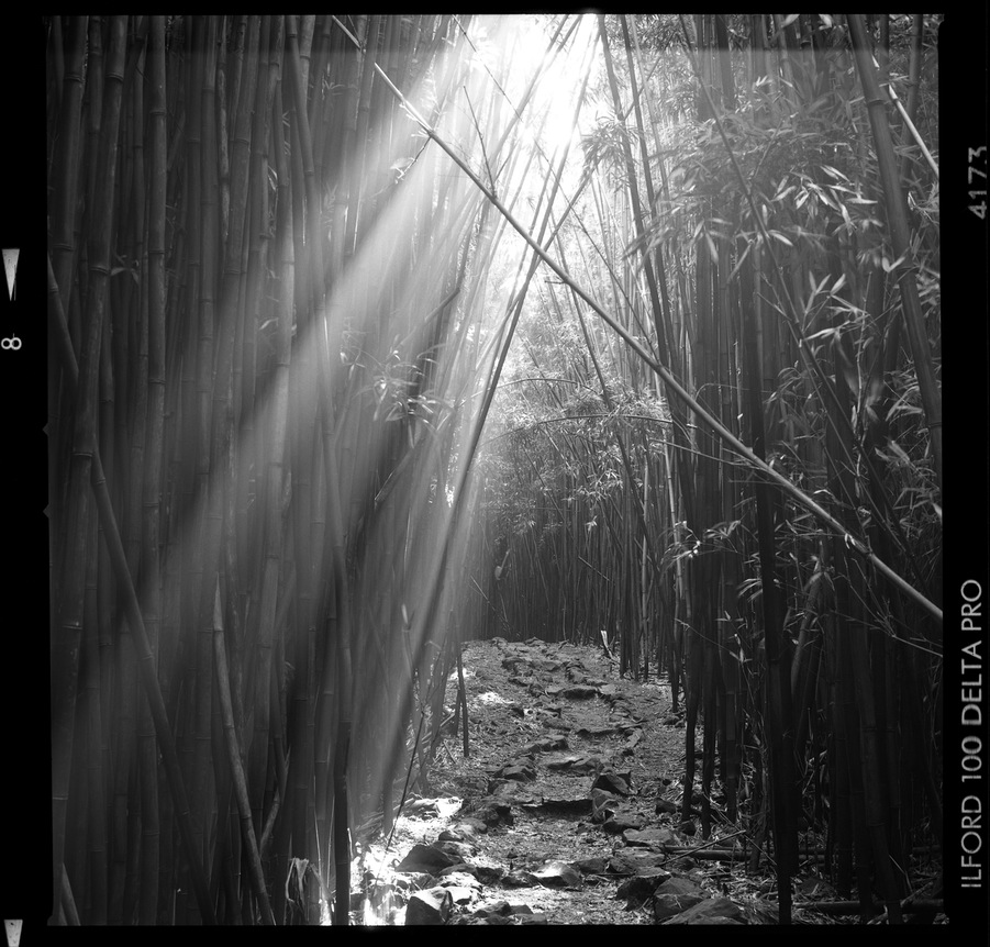 Maui_Bamboo_009_blog