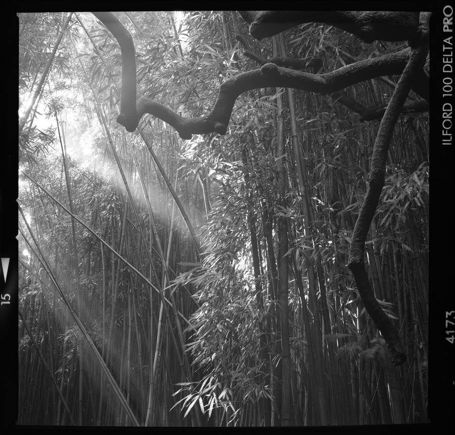 Maui_Bamboo_014_blog