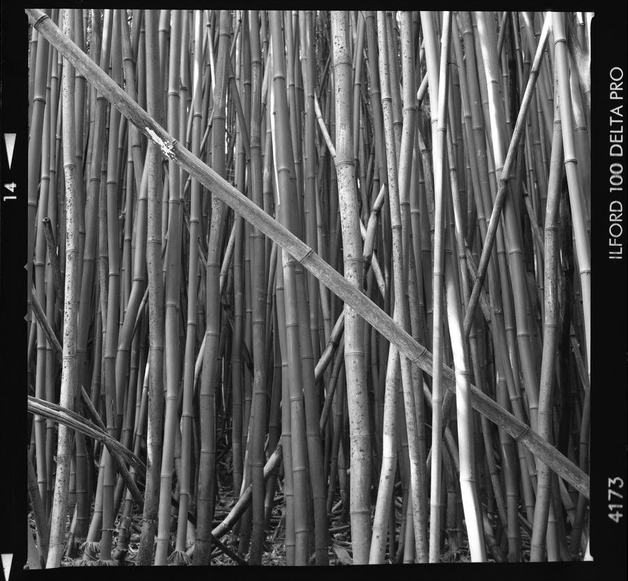 Maui_Bamboo_015_blog